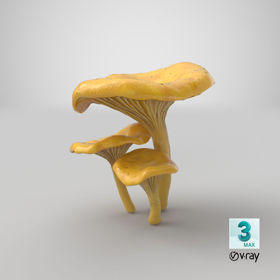 Champignons Chanterelle royalty-free 3d model - Preview no. 34