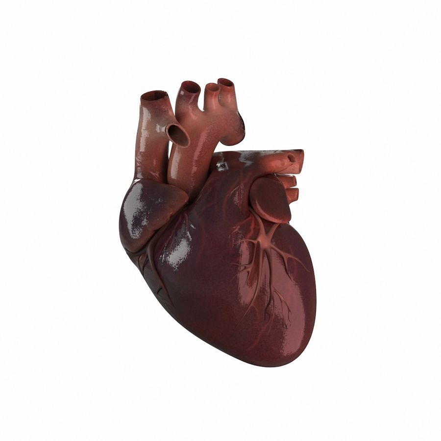 Human Heart royalty-free 3d model - Preview no. 1
