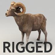 Ram rigged 3d model