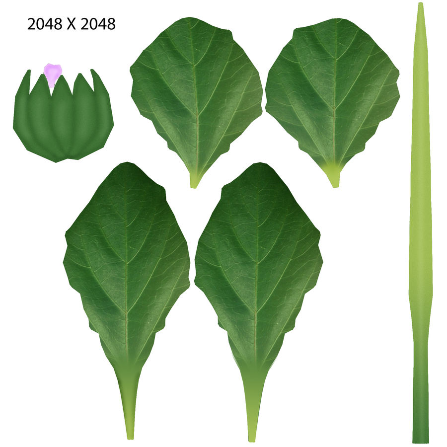 Plantago Plant royalty-free 3d model - Preview no. 6