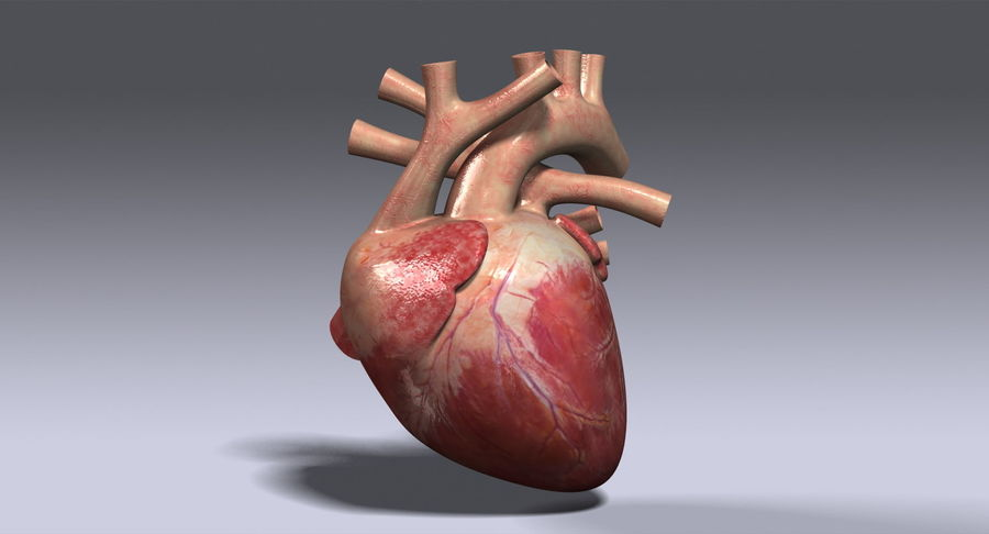 Human Heart Rigged royalty-free 3d model - Preview no. 3