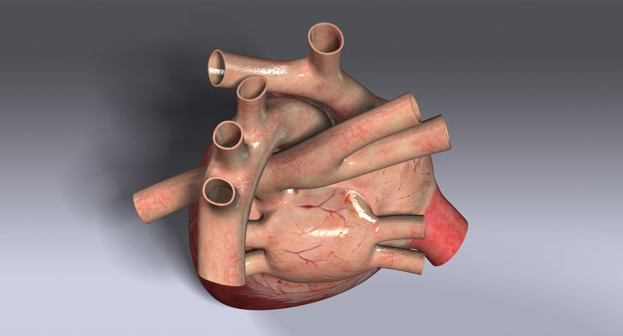 Human Heart Rigged royalty-free 3d model - Preview no. 11