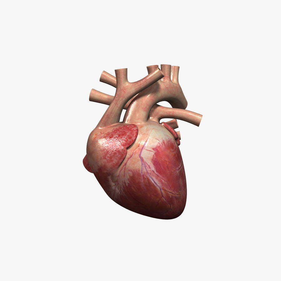 Human Heart Rigged royalty-free 3d model - Preview no. 1