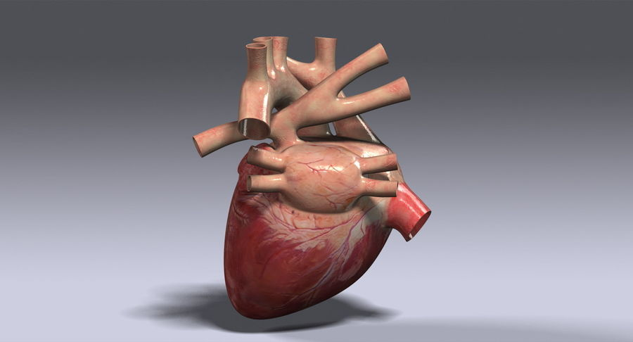 Human Heart Rigged royalty-free 3d model - Preview no. 7