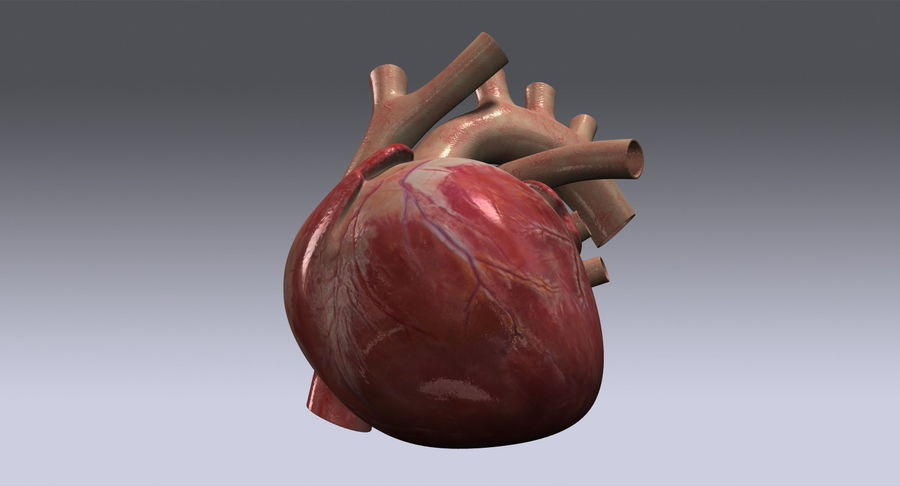 Human Heart Rigged royalty-free 3d model - Preview no. 12