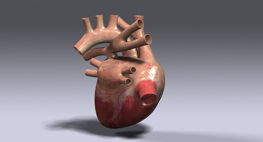 Human Heart Rigged royalty-free 3d model - Preview no. 6