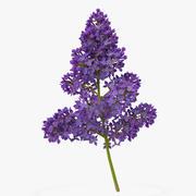 수수 꽃가루 라일락 5 3D 모델 3d model