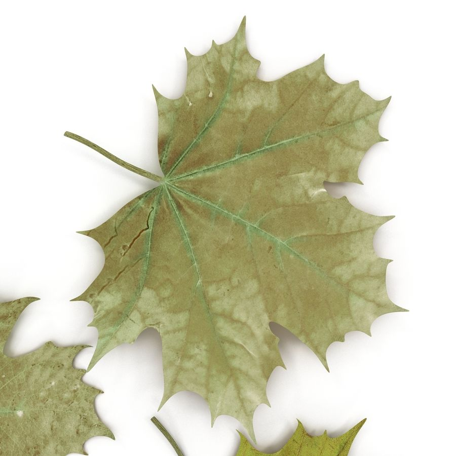 Foglie di acero verde royalty-free 3d model - Preview no. 21