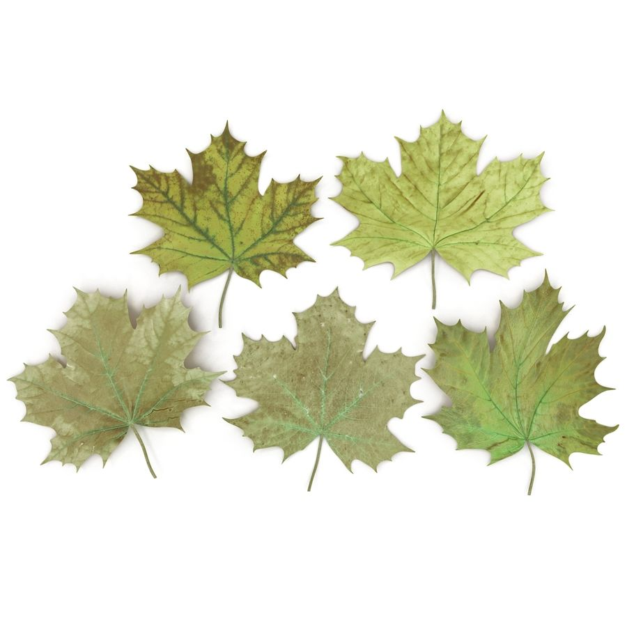 Foglie di acero verde royalty-free 3d model - Preview no. 9