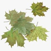 Green Maple Leaves 3d model