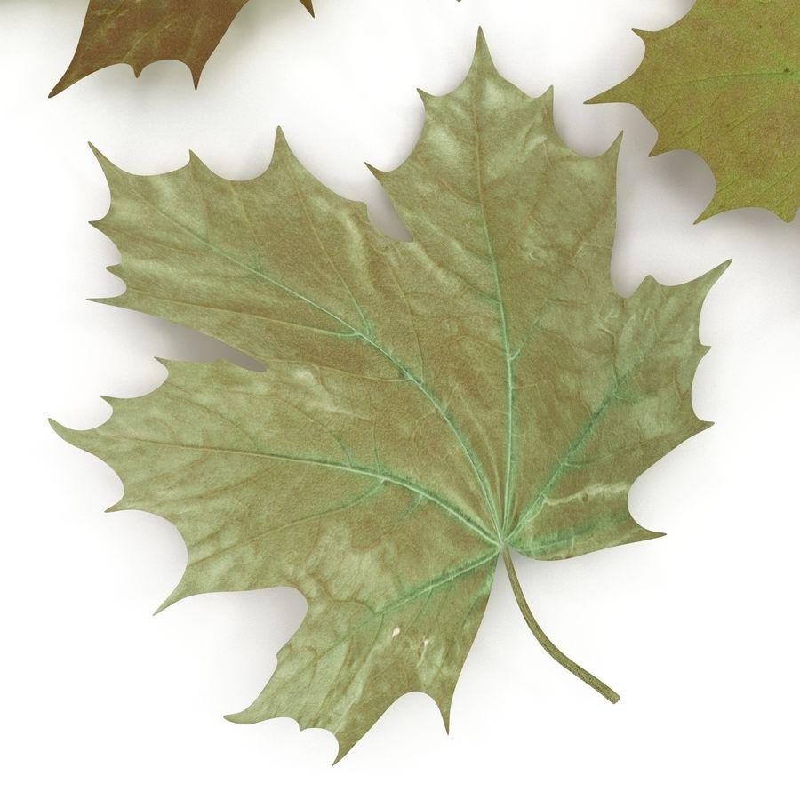 Foglie di acero verde royalty-free 3d model - Preview no. 18
