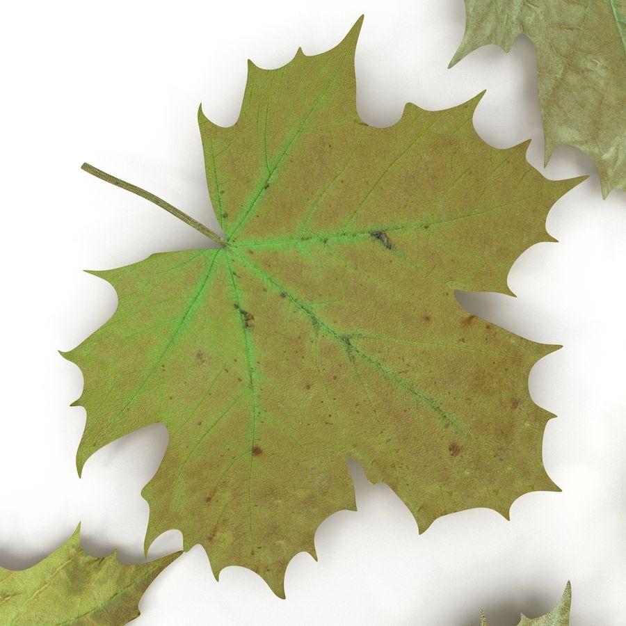 Foglie di acero verde royalty-free 3d model - Preview no. 17