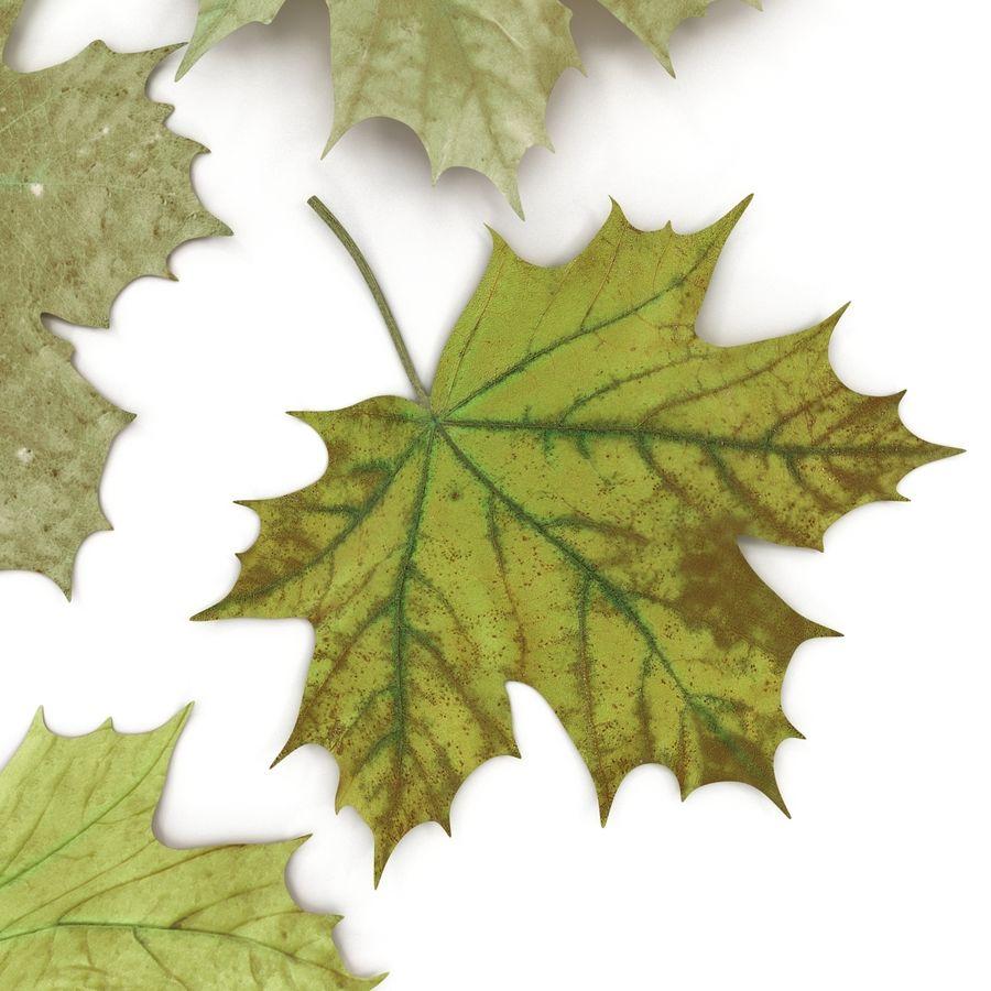 Foglie di acero verde royalty-free 3d model - Preview no. 20
