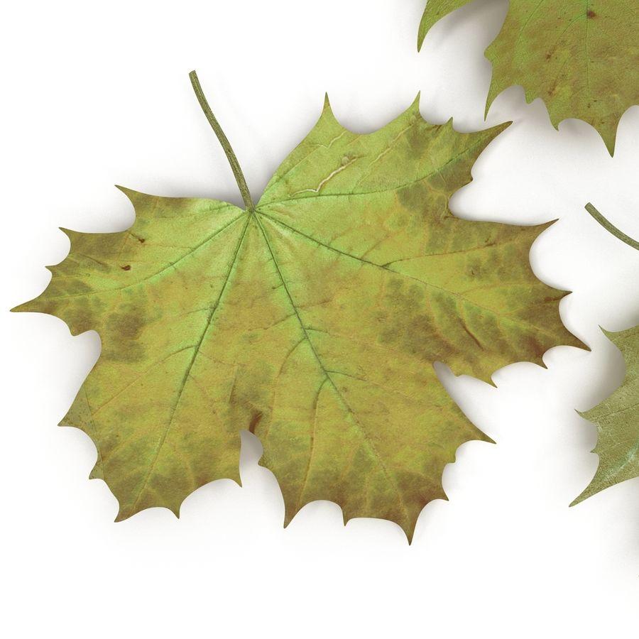 Foglie di acero verde royalty-free 3d model - Preview no. 16