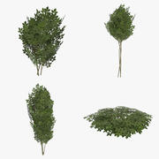 Game ready shrubbery pack one 3d model