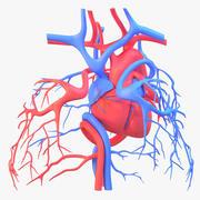 Kalp dolaşımını (1) 3d model
