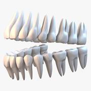 歯 3d model
