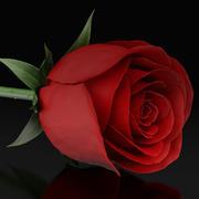 kırmızı gül 3d model