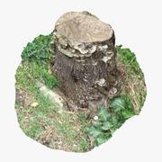 木の切り株17 3d model