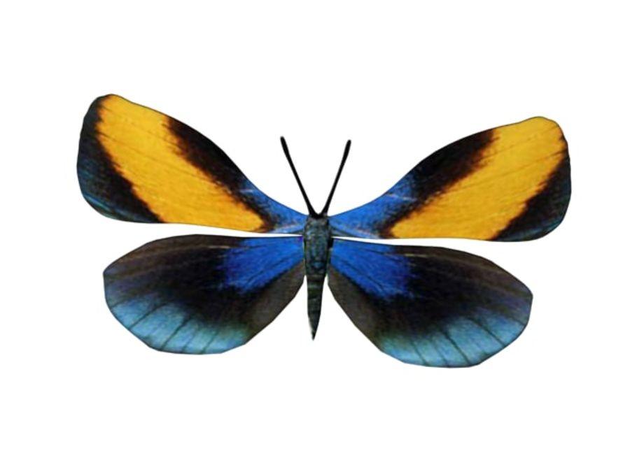mariposa royalty-free modelo 3d - Preview no. 6