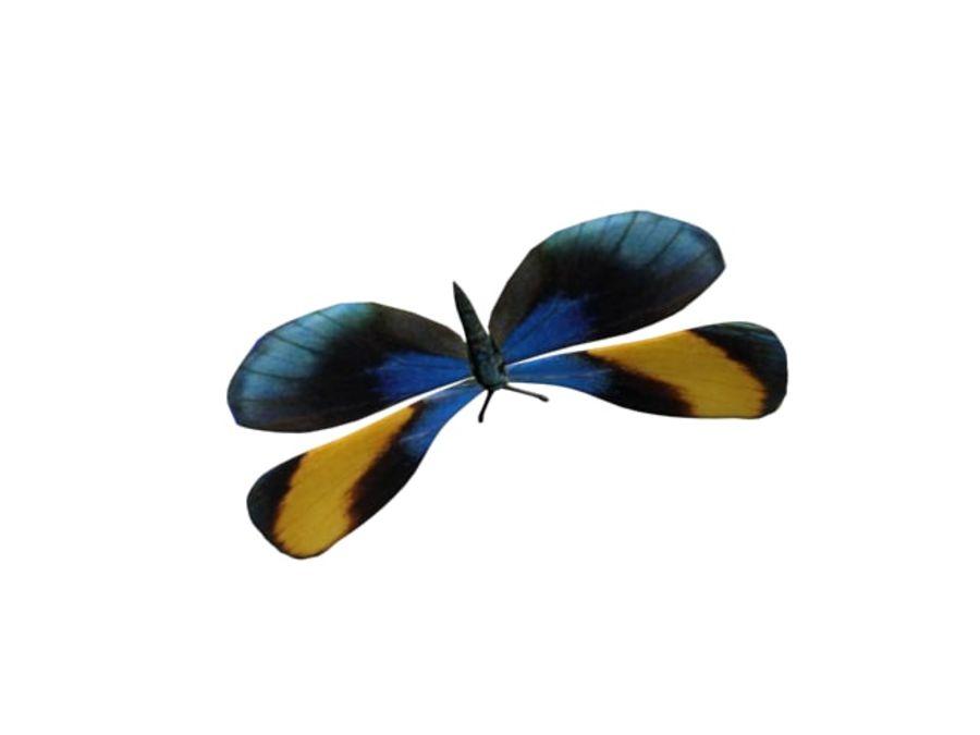 mariposa royalty-free modelo 3d - Preview no. 1