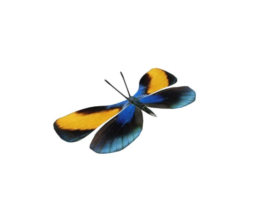 mariposa royalty-free modelo 3d - Preview no. 5