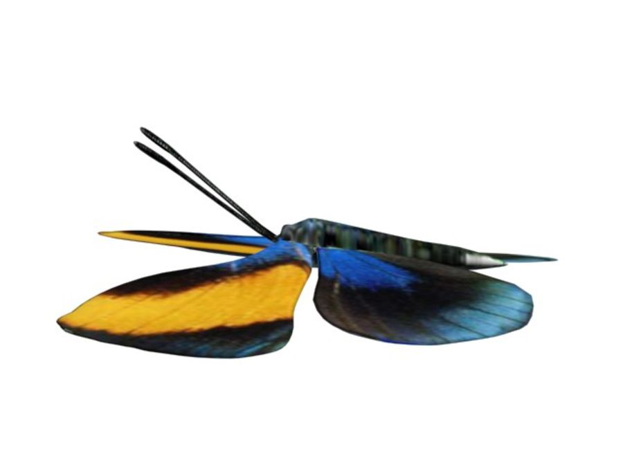 mariposa royalty-free modelo 3d - Preview no. 4