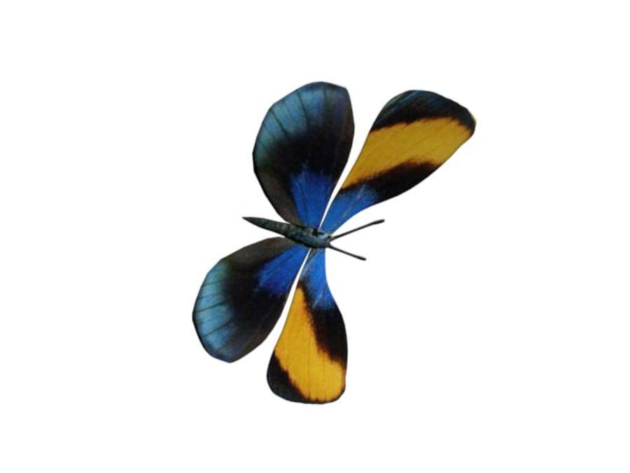 mariposa royalty-free modelo 3d - Preview no. 2