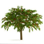 桃树 3d model