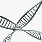 Hélice d'ADN 3d model
