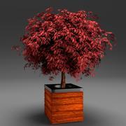 Горшечное красное лиственное дерево 2 3d model