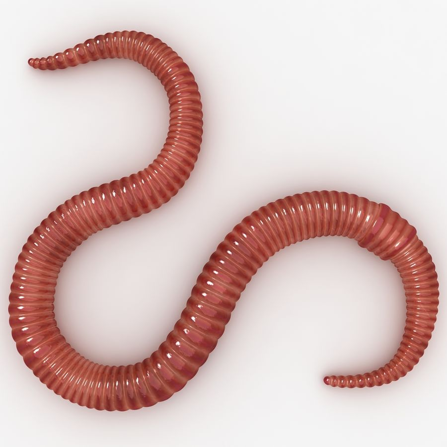 Worm royalty-free 3d model - Preview no. 6