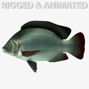 Tilapia Fisch 3d model