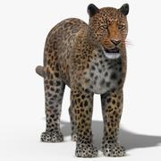Leopard (Fur) 3d model