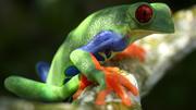 Древесная лягушка высокого качества 3d model