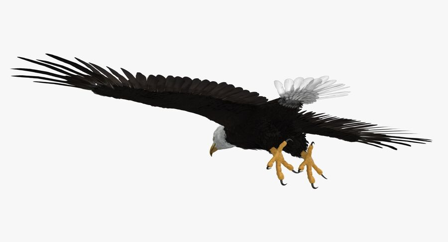 Bald Eagle T Pose royalty-free 3d model - Preview no. 6