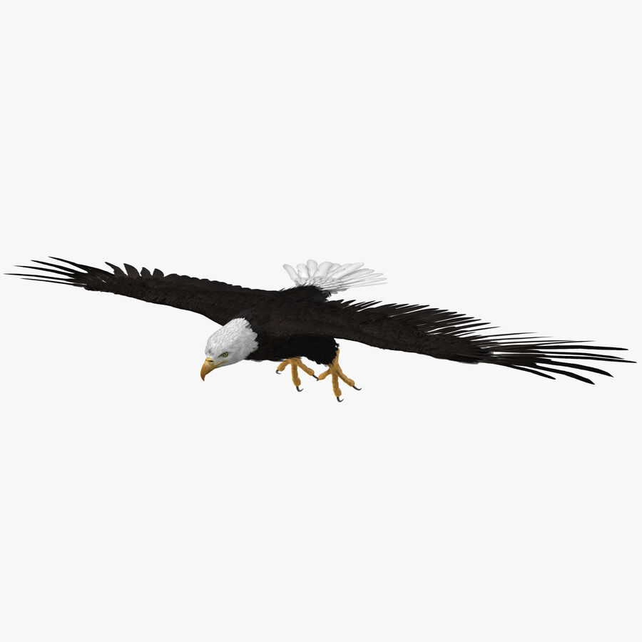 Bald Eagle T Pose royalty-free 3d model - Preview no. 1