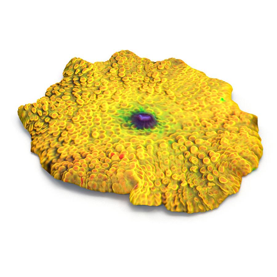 黄色Discosoma蘑菇珊瑚 royalty-free 3d model - Preview no. 4