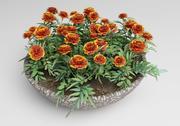 Tagetes  Marigold 3d model