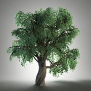 Stare drzewo 3d model