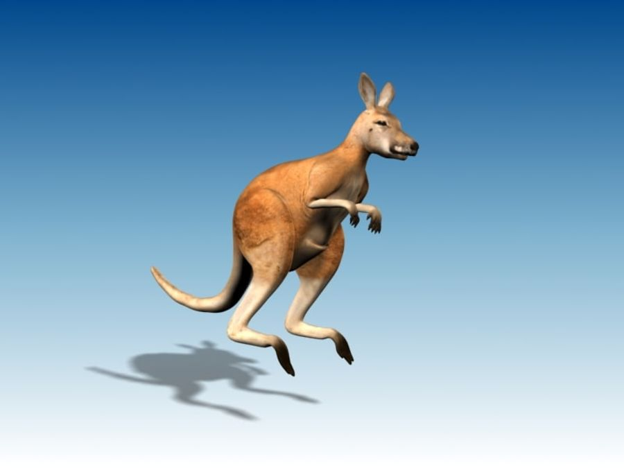 Kangaroo 3D Model Rigged Animated royalty-free 3d model - Preview no. 2