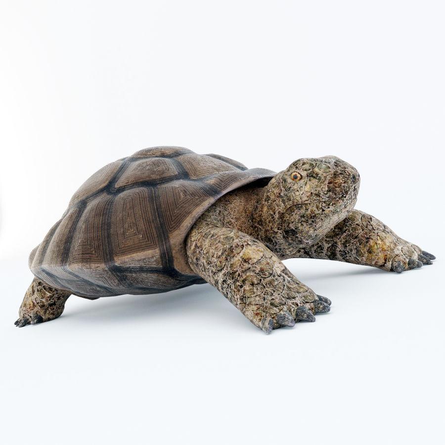 черепаха royalty-free 3d model - Preview no. 1