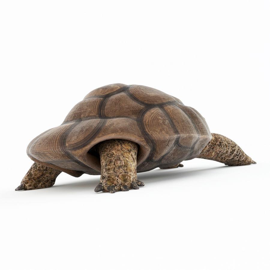 черепаха royalty-free 3d model - Preview no. 6