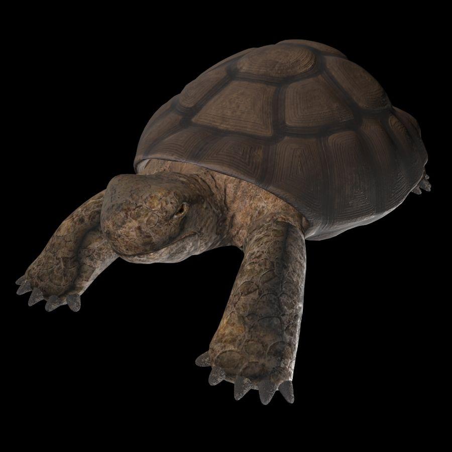 черепаха royalty-free 3d model - Preview no. 3