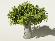 tea tree Camellia sinensis 3d model