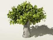 çay ağacı Camellia sinensis 3d model
