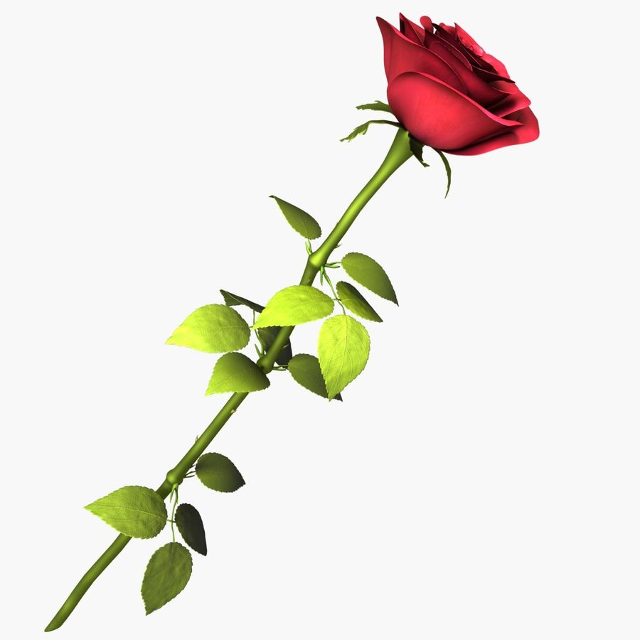 Rose Red royalty-free 3d model - Preview no. 1