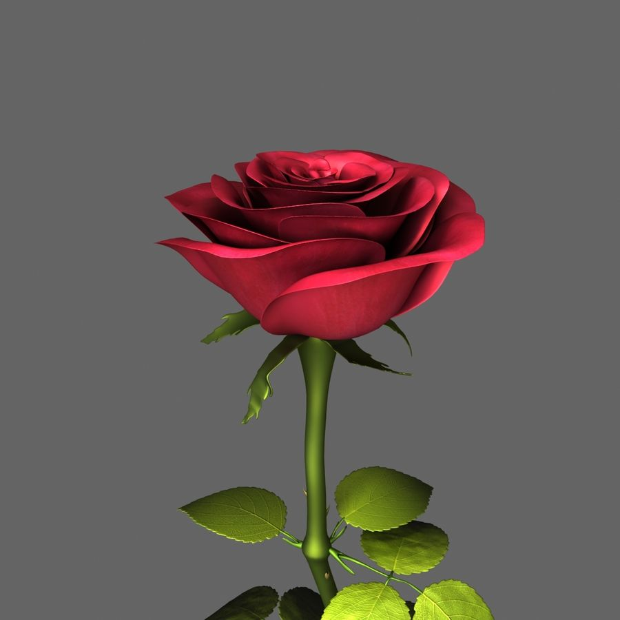 Rose Red royalty-free 3d model - Preview no. 5