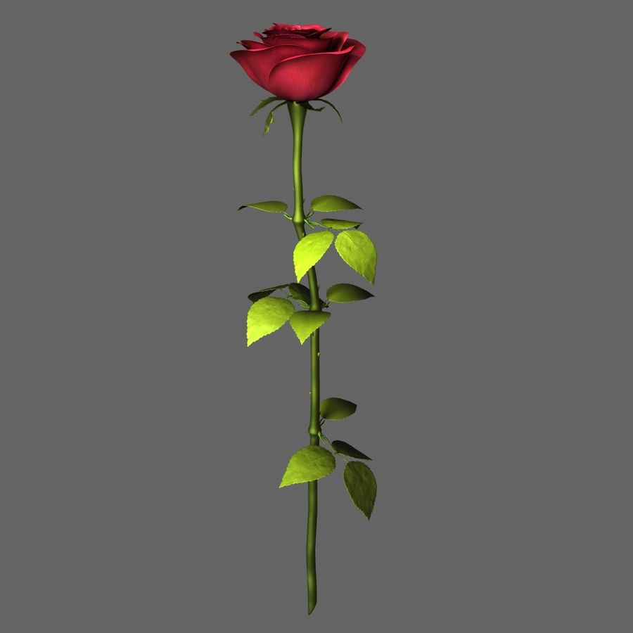 Rose Red royalty-free 3d model - Preview no. 3