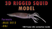 Squid Model 3D Realistic Animated 3d model